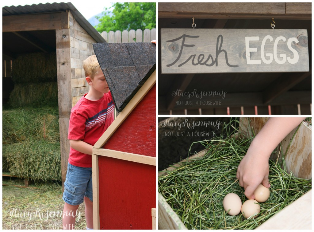 backyard chickens and how to care for them