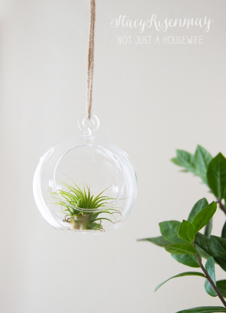 15 easy to care for houseplants! air plant