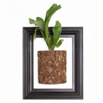 Staghorn Fern Wall Art
