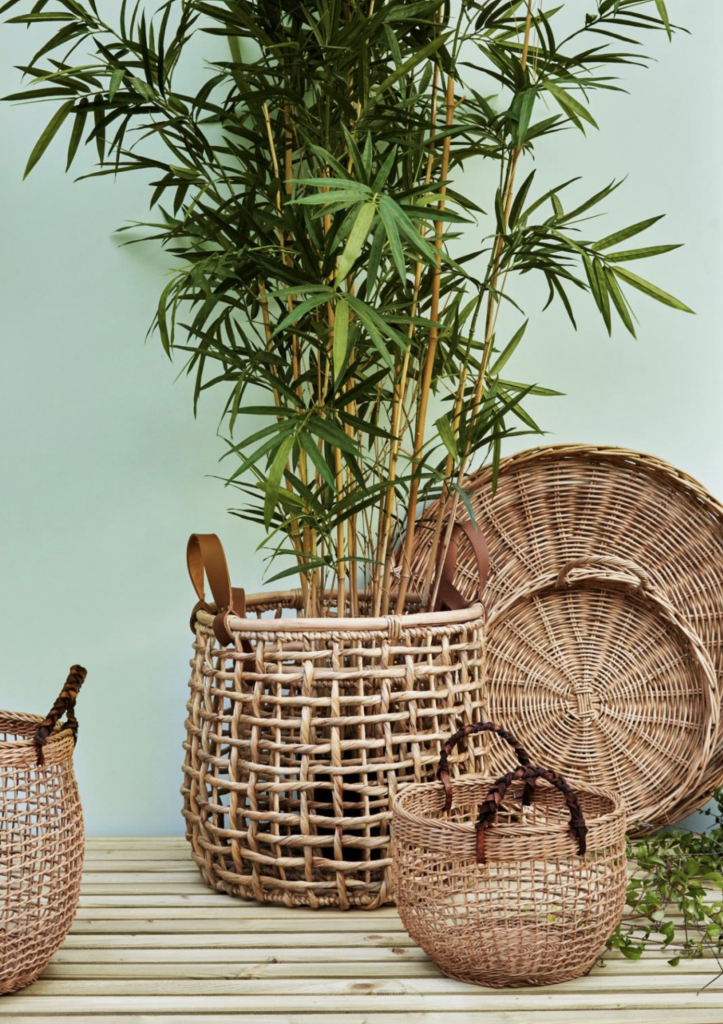 15 easy to care for houseplants! bamboo