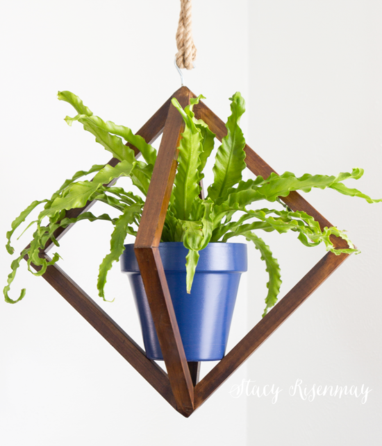 15 easy to care for houseplants! bird-nest-fern