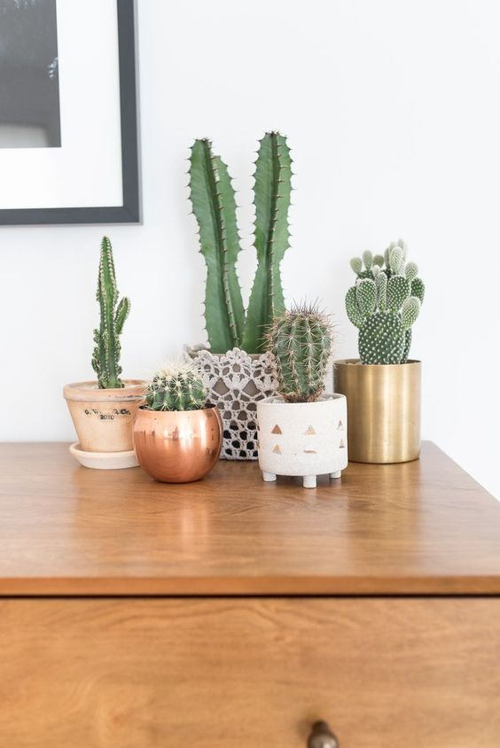 15 easy to care for houseplants! cactus