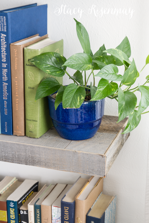 15 easy to care for houseplants! pothos-plant